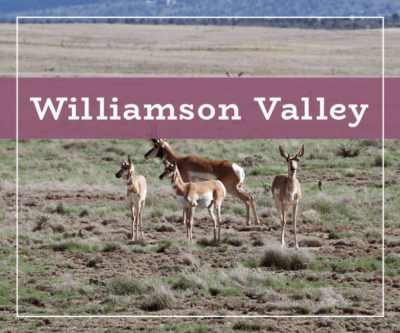 Williamson Valley Real Estate and Homes